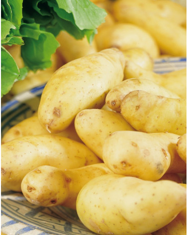 Kartoffel Stella