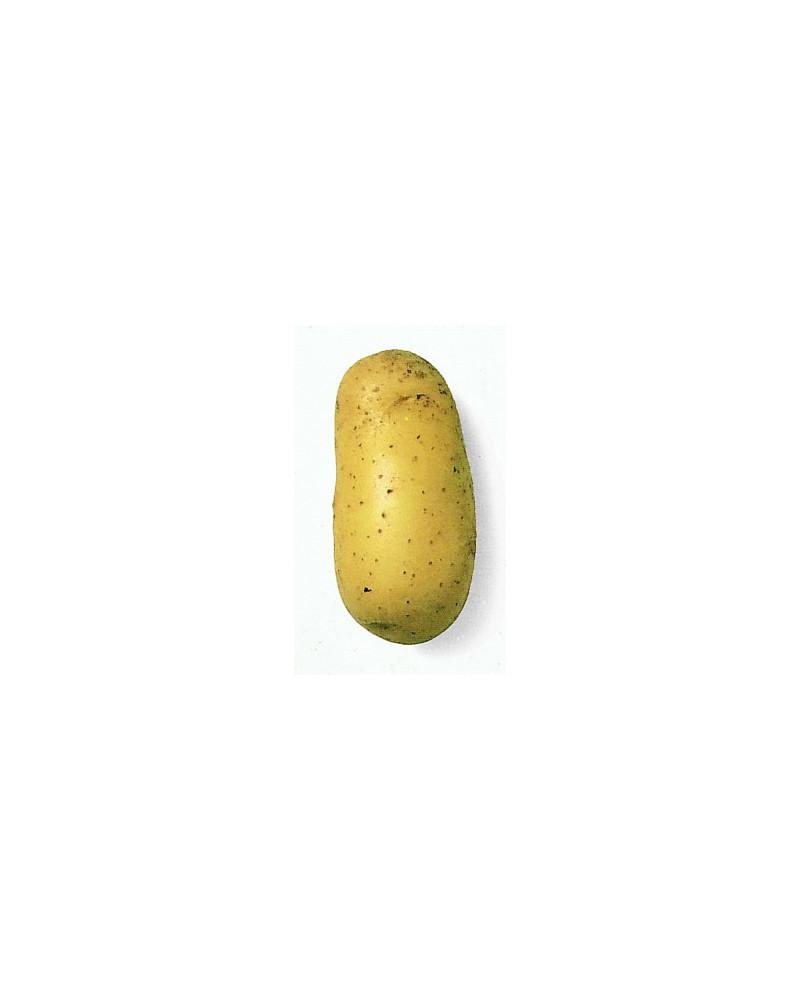 Kartoffel Charlotte