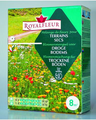 Blumenmischung für trockene Böden