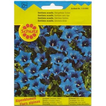Schutz-Alpenblumensamen