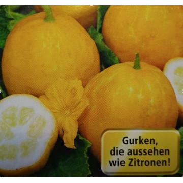 Gurken/Kürbis/Zucchetti