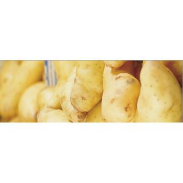 Saatkartoffeln und Steckzwiebeln