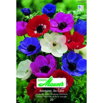 Diverse Blumenzwiebeln