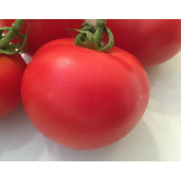 Veredelte Tomaten