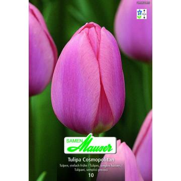 Einfache, frühe Tulpen