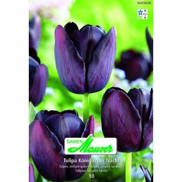 Einfache, späte Tulpen
