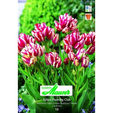 Bouquet-Tulpen