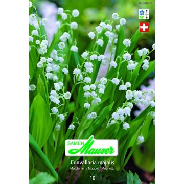 Blumen für schattige Nischen